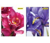 Блокнот Silwerhof 731186-26 40л. клет. А6 Цветы 2диз. картон сплош.уф.лак гребень